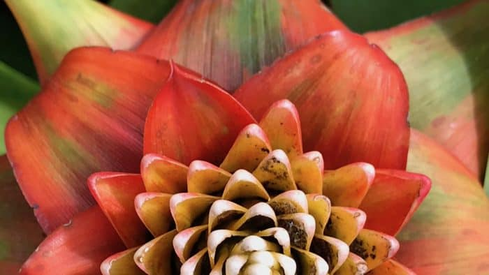 Photos: Costa Rica's fantastic flora – The Tico Times | Costa Rica News | Travel | Real Estate